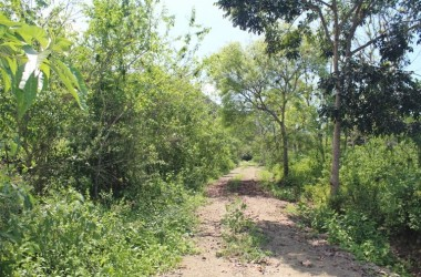 Tapachula de Córdova y Ordoñez Mexico - Dos Mangas: Lush Soil,Beautiful Lush Mountain and Tropical Views.