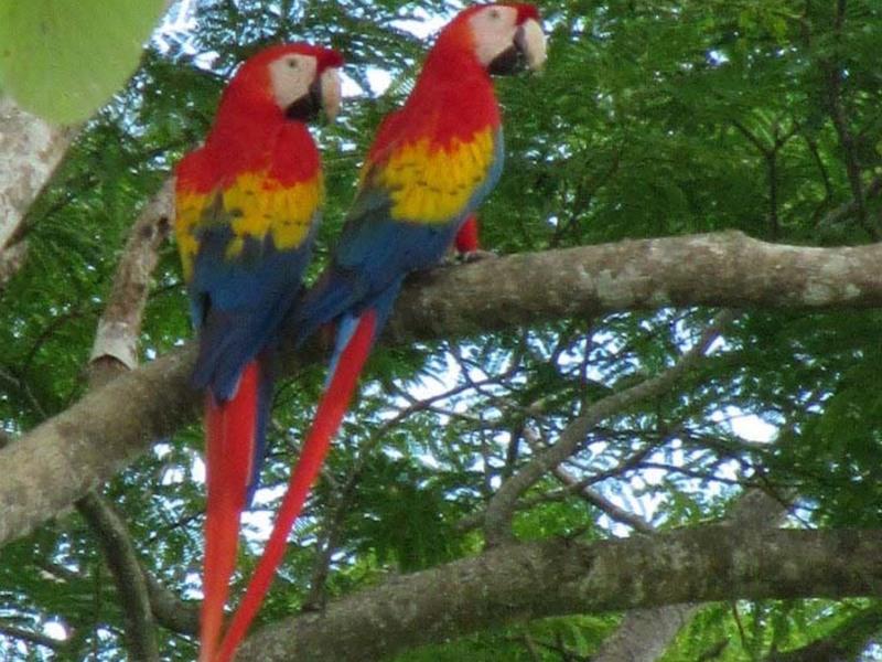 Esterillos-Costa-Rica-property-dominicalrealty6146-9.jpg