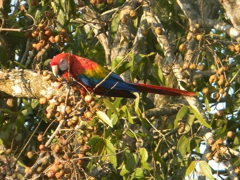 Esterillos-Costa-Rica-property-dominicalrealty6201-9.jpg