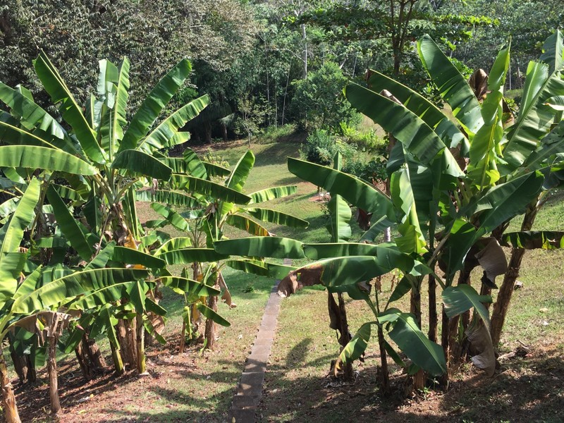 Esterillos-Costa-Rica-property-dominicalrealty6404-10.jpg