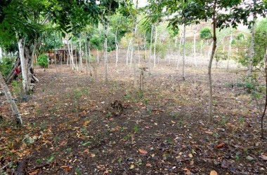 Olon Ecuador - Los Arboles de la Vida