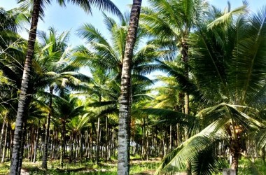 Ayampe Ecuador - Coconut Grove