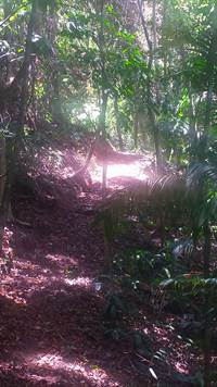 Platanillo-Costa-Rica-property-costaricarealestatePLT067-10.jpg