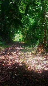 Platanillo-Costa-Rica-property-costaricarealestatePLT067-5.jpg