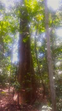 Platanillo-Costa-Rica-property-costaricarealestatePLT067-9.jpg