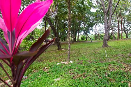 Roatan-Honduras-property-roatanlife992.jpg