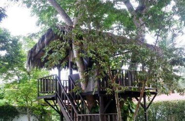 Olon Ecuador - Casa de Arbol Oloncito