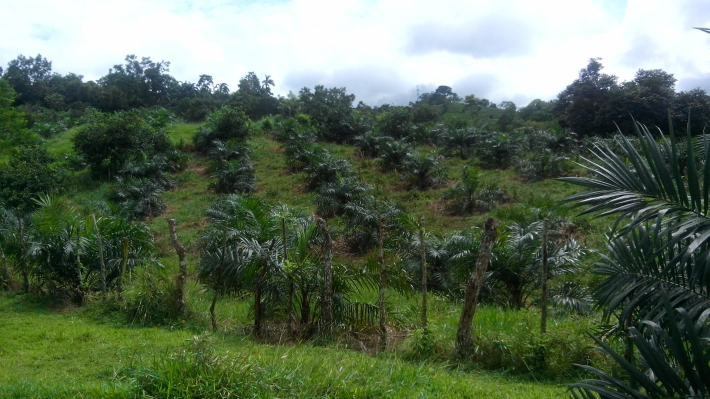 San-Isidro-Panama-property-panamarealtor5564.jpg